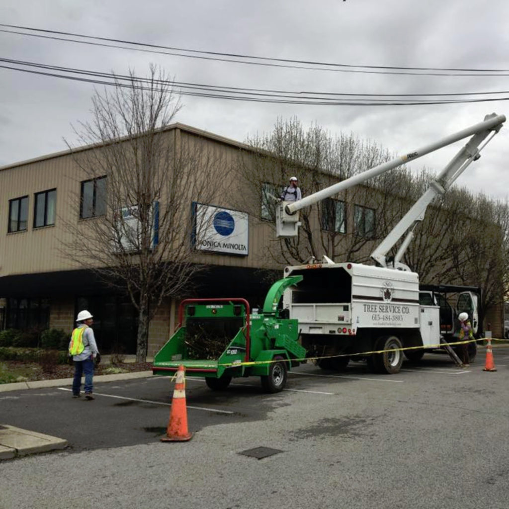 Bucket truck pruning trees
