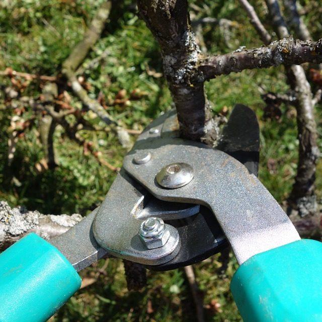 pruning-shears-535350_960_720