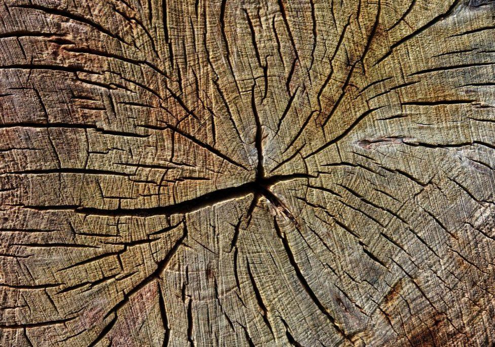 wood-3312216_1920